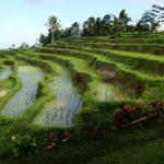 Peran Penting Pertanian Sistem Sengkedan pada Masyarakat Dataran Tinggi